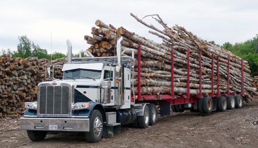 Billot De Bois De Chauffage : Wood Chipping Trucks Loading